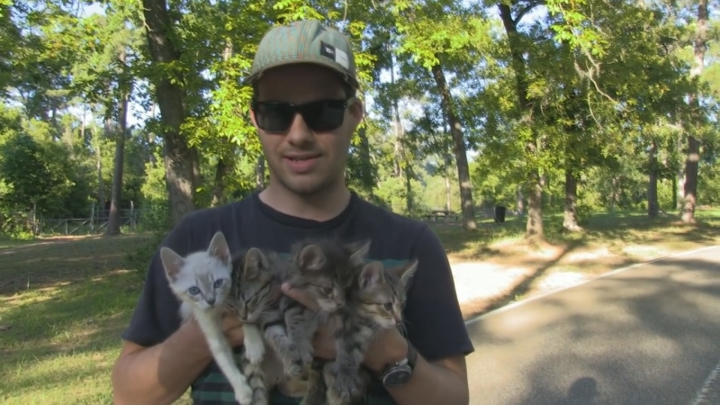 My brother and me stumbled across 4 kittens in the middle of the woods. Мой брат и я нашли в парке в Сан Антонио 4 котят.