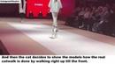 Dictator of fashion - Mrs. cat on catwalk