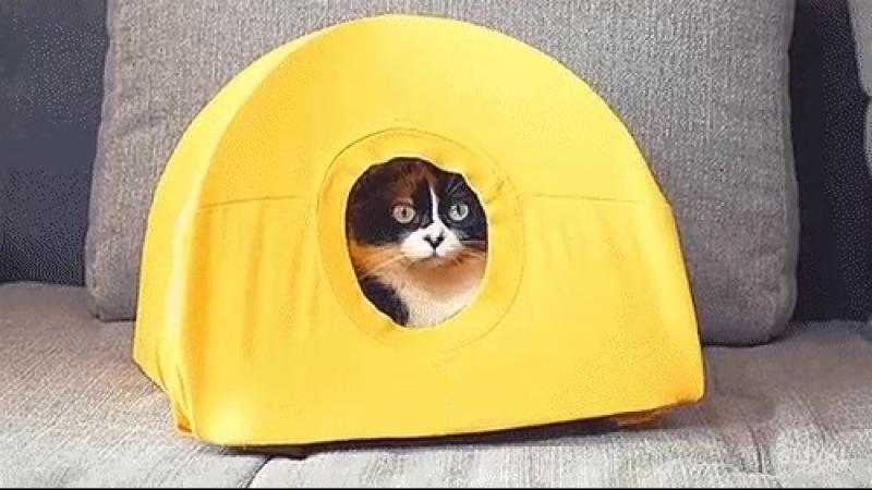 домик для котика