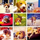 Собачье счастье — это когда хозяин играет с ним и определяет ему несколько минут своего вн…