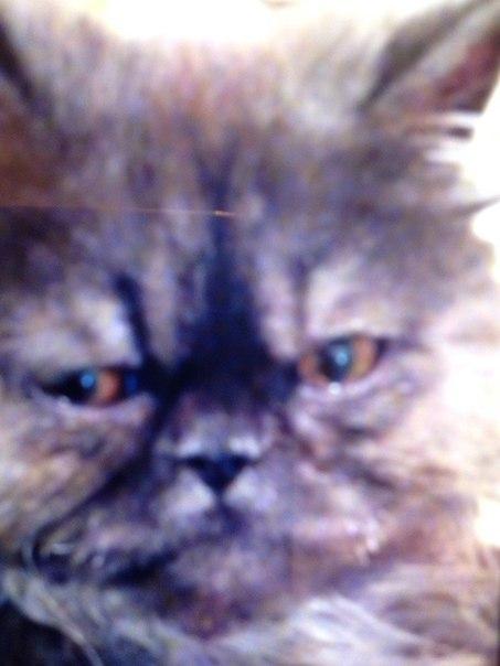 Чёрный кот, сеть магазинов, г Северодвинск - 2ГИС