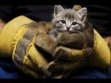 Спасение котика | Mews News | Котоновости