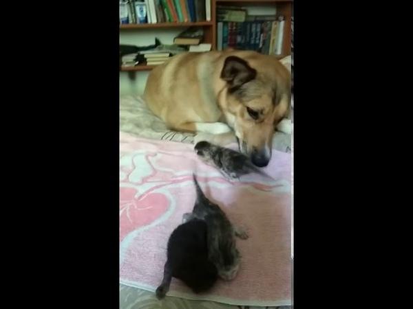 Челябинская собака стала мамой шестерых котят