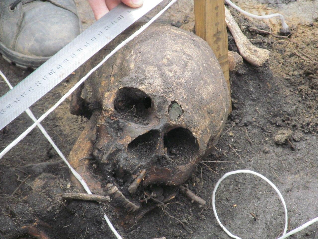Археология. Раскоп возле дома.Захоронение, останки (06.11.2014)