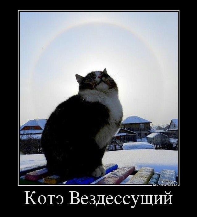 Котята на авито бесплатно москва решили