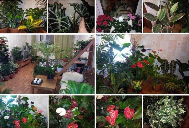 Натуральная подкормка для комнатных цветов