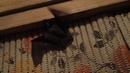 Khimku Quiz, 16.11.2018, вопрос № 3. Ночные бабочки семейства медведиц - лакомая добыча для НИХ. Однако популяцию свою они сохраняют - в том числе и благодаря уникальному умению издавать ультразвуковые щелчки.