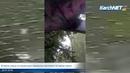 В Керчи новые остановочные павильоны протекают во время ливня