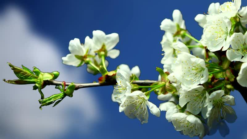 Весна - настоящее чудо... ☘ 🌳 🌿 ☘🍀