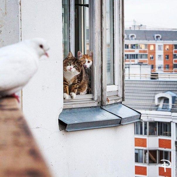 Два кота–психолога отговаривают голубя от суицида.