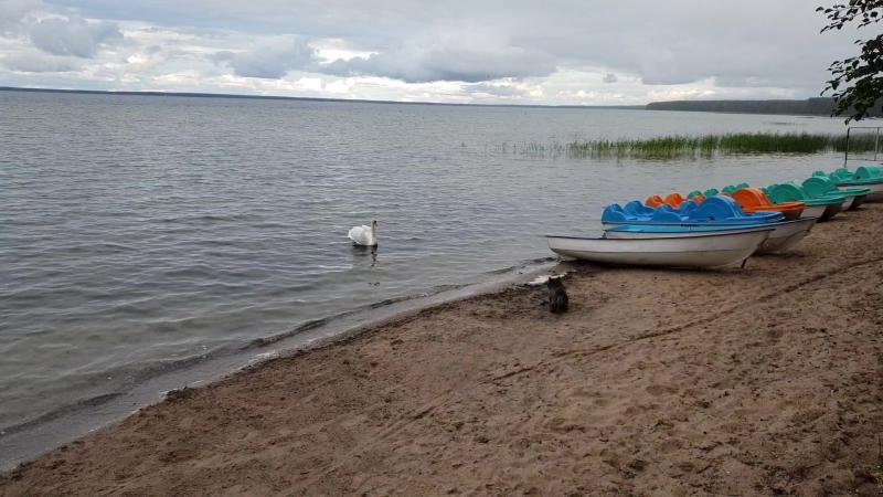 На озере Нарочь. Беларусь.