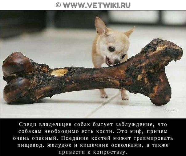 Фото №456239028 со страницы Софьи Никишовой