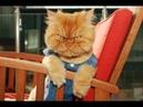 Ну очень Смешные коты и кошки. Приколы с котами. Funny cats Compilation.