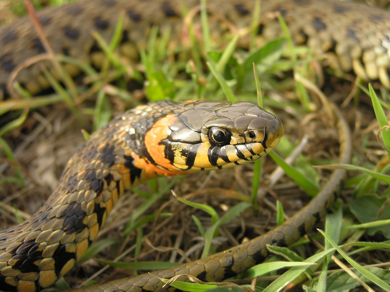 Змеи атакуют Крым