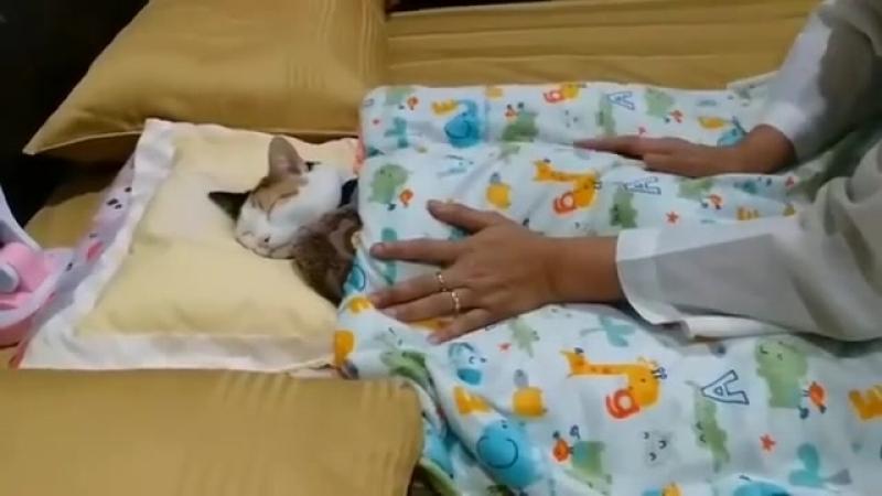 Sleep tight kitty