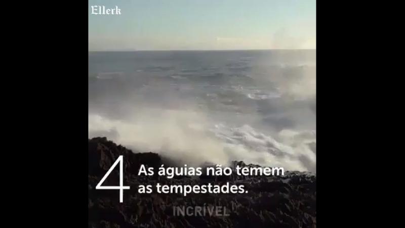 Os 7 ensinamentos da Águia !!