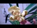 Орхидея Ванда зацвела впервые за пять лет благодаря...