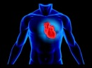 Программа для нормализации работы сердца и СС системы