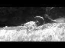 Сцена в реке из фильма Влюблённые (1969)