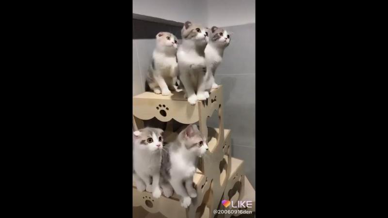 Чем больше котов, тем круче)🤣