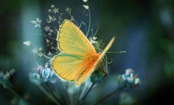 Нельзя приклеить к гусенице крылья и заставить ее летать, как бабочку.