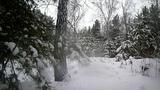 Снежный лес и спокойная музыка