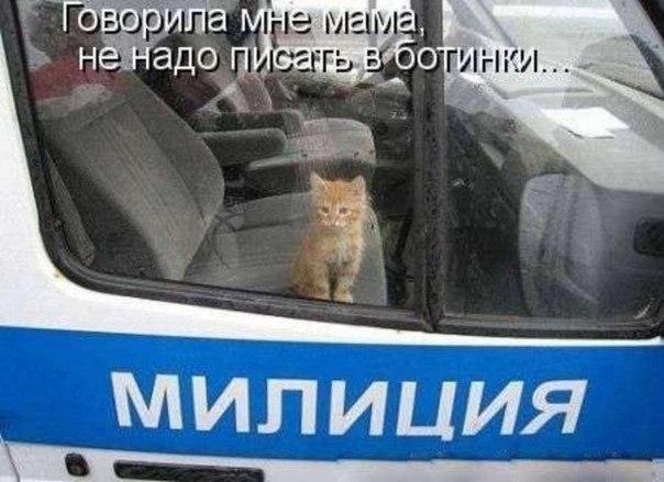 картинки кот мент