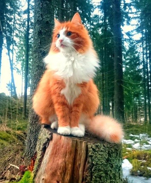 Хранитель северных лесов