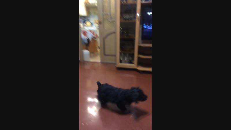 Обучение собаки онлайн » Freewka.com - Смотреть онлайн в хорощем качестве