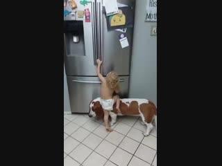 Собаке надоело держать ребенка. Видео прикол