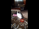 Video_2018-09-20_15-02-19