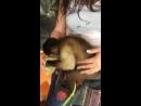 как то по дороге с обеда большая обезьянка встретила маленькую