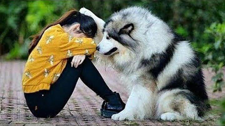 وفاء الحيوانات لأصحابها 😱😲😍 || سبحان الله