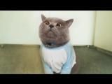 Приколы про котов с ОЗВУЧКОЙ животных – Угарные коты и кошки 2018 от Domi Show.mp4