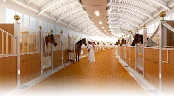 Арабские скакуны в Дубае живyт лучшe наc