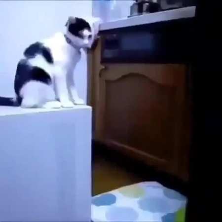 Кошачья подстава · coub коуб