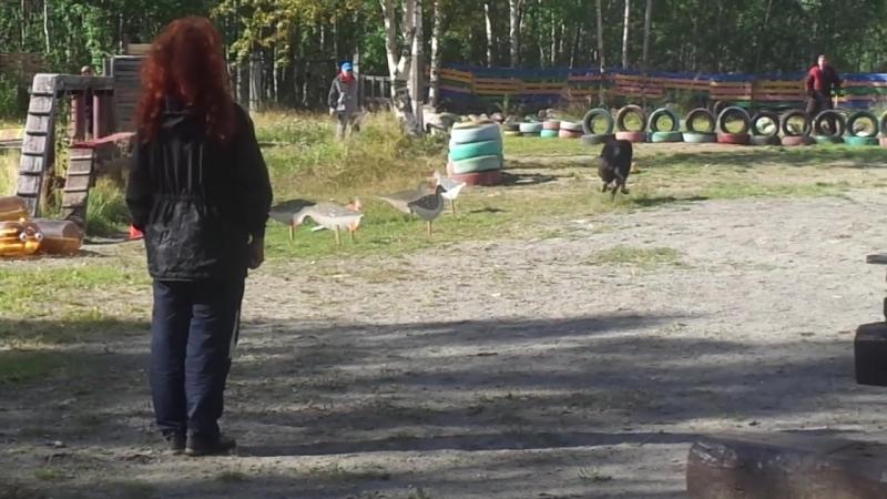 Даймлер из ДС, 1 место, 2018, Мурманская область г. Апатиты. Мондио 2.