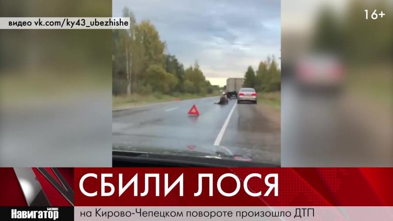 На Казанском тракте сбили лося 21 09 2018