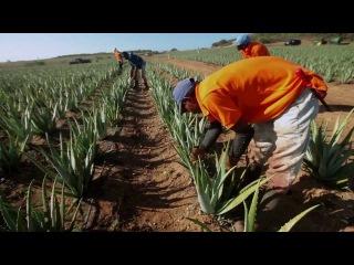 Portekiz Organik Tarıma Yönelik Ulusal Strateji ve Eylem Planını Onayladı