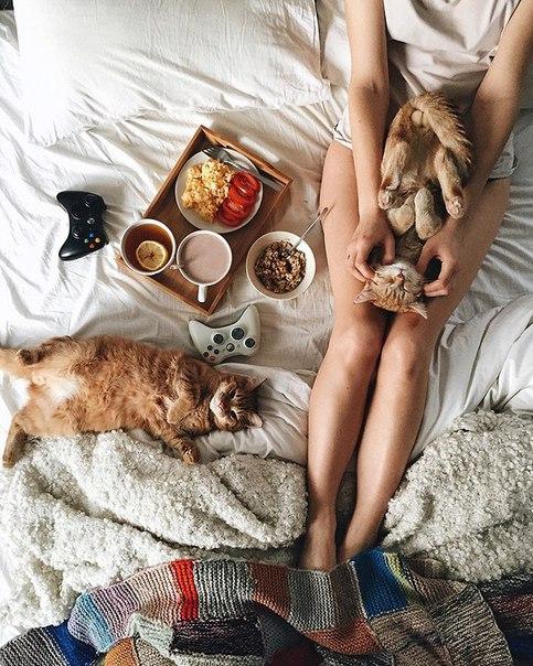 Эти два рыжих котёнка, найденных в парке, неразлучны с первого дня Московский менеджер Анна Юхтина как-то наткнулась в парке не двух крошечных рыжих котят. Они были слишком хрупкими и