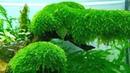 Bí quyết giúp hồ thủy sinh phát triển xanh tốt và không rêu hại