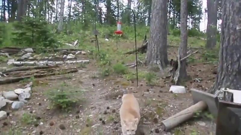 Котик на охоте