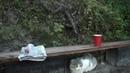 кот Саймон у озера