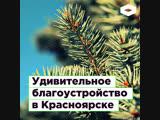 Благоустройство Красноярска рабочие сажают срубленные сосны ROMB