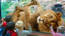 Funny Animals & Kids at the Zoo - Funny Zoo Animals - Funny Animals Trolling Kids and Babies Video