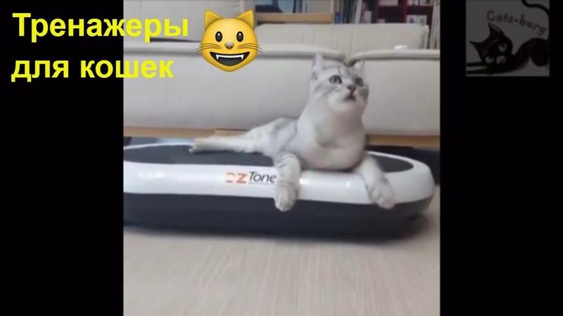 Тренажерка для кота Беговое колесо Смешное видео про кошек Cat training