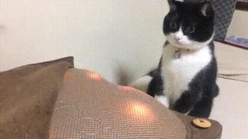 удивление кота
