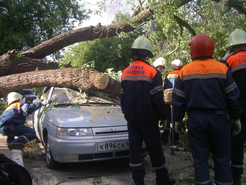 В Таганроге и Ростове ожидается сильный ветер, спасатели не рекомендуют парковаться под деревьями