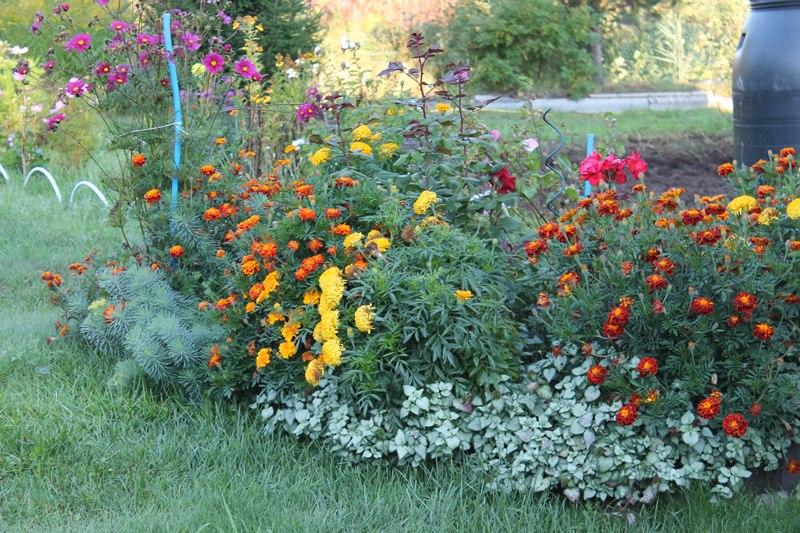 Фотоальбом «Осень - а что в саду и огороде»
