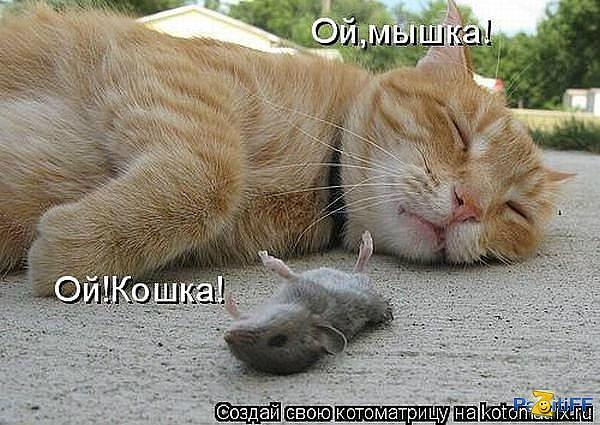 http://cs408930.vk.me/v408930640/925e/p6ZT_n5F32U.jpg